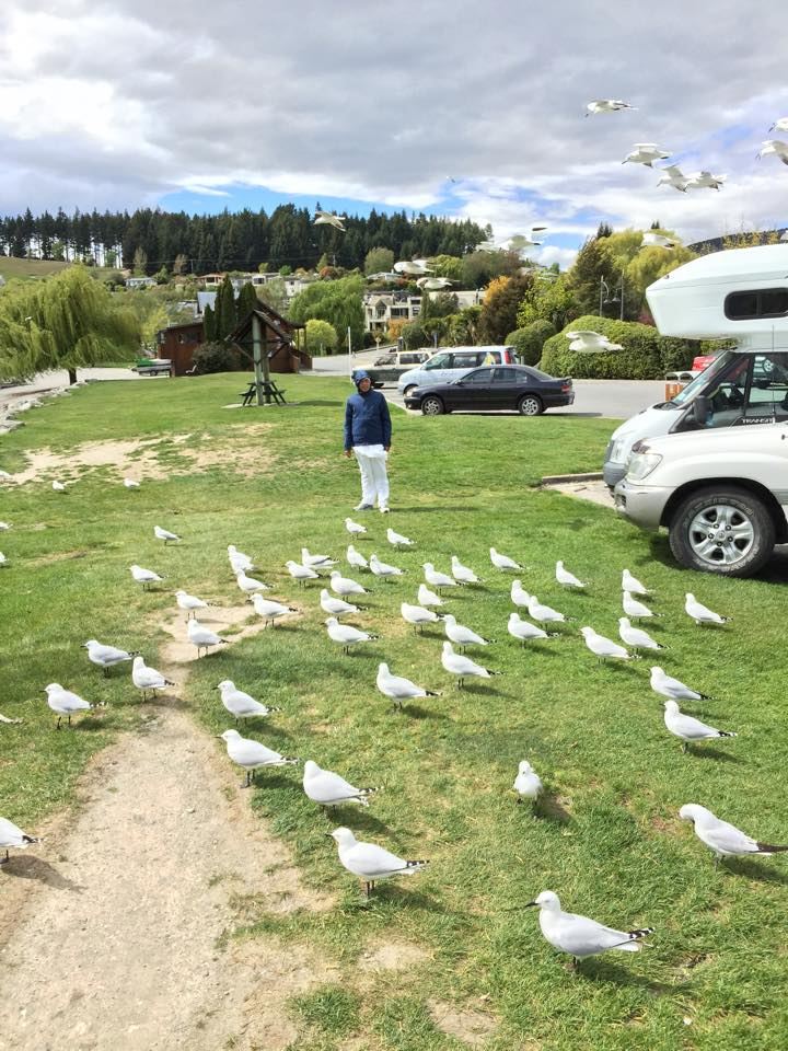 Feeding Birds In Wanaka
